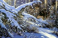 """Silence of the North Wolf Print By Derk Hansen Image Size 29"""" x 19"""""""