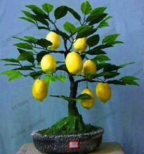 Lemon Tree Seed Green Citrus Fruit Edible Bonsai Plant DIY Home Garden 20pcs