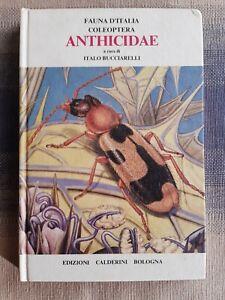 Fauna d'Italia  - Coleoptera - Anthicidae di I.  Bucciarelli