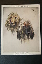 Afghan Hounds    Large Vintage Twin Portrait Card   EXC