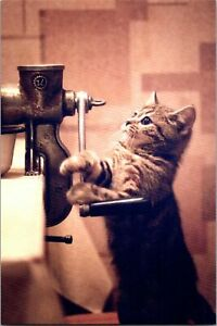 Cute Little Striped Gray Cat Meat Grinder New Modern Russia Real Photo Postcard
