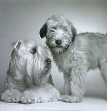 More details for soft coated wheaten terrier puppy dog black and white photo art print - scwt