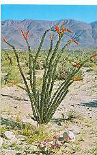 Plant Postcard - Ocotillo - Thorny Scarlet Flowered Desert Flora    A7582