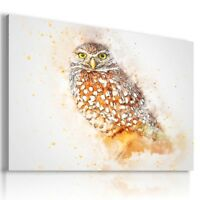 DRAWING OWL BIRD Animals PRINT CANVAS WALL ART PICTURE AB16 MATAGA
