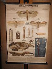 1 x Die Kleidermotten, alte Lehrtafel / Rollkarte (1543) gebraucht