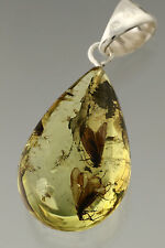 2 Large CADDISFLIES Genuine BALTIC AMBER Perfect Drop Silver Pendant p160428-6
