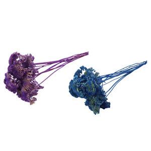 Achillea Stabilizzata Pz 10 Colorata Composizione Floreale