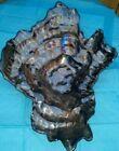 Original glass art sculpture unusual unique decor carnival shell abalone