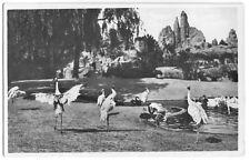 AK, Hamburg Stellingen, Tierpark, Vogelteich, um 1936
