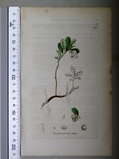 English Botany, Smith, Sowerby, handcoloured copperplate, 553, 3.Edition,1850.