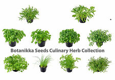 GARDEN HERB SEEDS 10 Packs / 1000 seeds/ thyme, rosemary,oregano,sage,dill &more