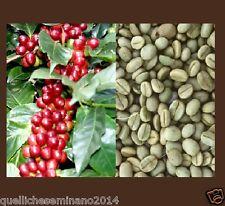 20 Semi di caffe  (Coffea Arabica) SEMI FRESCHI DECORTICATI pianta del caffè