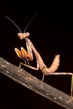 Praying Mantis Insect Journal : 150 Page Lined Notebook/Diary by C. S.