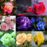 Rare Rose Seeds Home Garden Perennial Plant Flower Indoor Bonsai Flower 60pcs WB