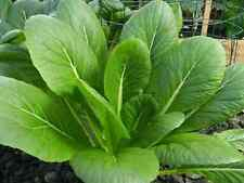 "KOMATSUNA SEEDS ""JAPANESE MUSTARD SPINACH"" (100 SEEDS)"