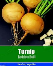 Golden Ball Open Pollinated Turnip, 2000 Heirloom Seeds- TURNIP GOLD BALL .