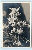 *Edelweiss Leontopodium Alpinum Flower Switzerland Vintage Photo Postcard C61