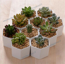 1x Cute White Ceramic Succulent Planter Miniature Flower Pots Garden Planter Pot