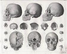 A4 Poster – Vintage las secciones transversales del cráneo humano (impresión de foto médica Arte)