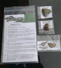 Dinosaur Fossil Pack REAL DINOSAUR Fossils -  Egg Shell, Bone, Coprolite