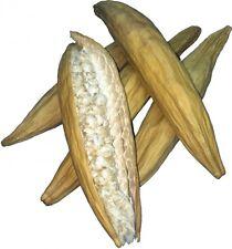 Kapok Schote Kapokschote Nistmaterial für Nager und Vögel