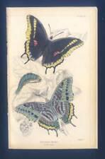 Schmetterlinge-Insekten-Entomologie - altkolorierter Stahlstich 1840