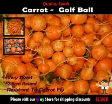 Carrot Golfball 100 Seeds Minimum. Vegetable Garden Plant. Very Unusual.