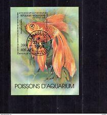Poissons D Aquarium Sehr schöner Fisch block