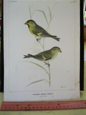 Vintage Print,PAIR SO.AMERICAN BIRDS,1855,US.Astrological Expedition,Dup.1