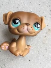 Littlest Pet Shop #786 Brown Pug Puppy Dog w/ Blue Eyes & Freckles