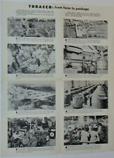 VINTAGE 1960s CLASSROOM POSTER 'TOBACCO FROM FARM TO PACKAGE'! 8 PICTURES! 17x21