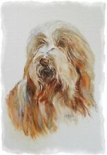 Bearded Collie A6 Blank Card Design No 13 By Starprint