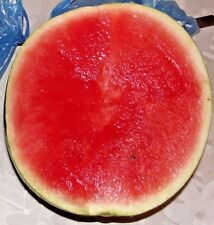 Seeds fruit Watermelon Northern Lights. early maturing  from Ukraine