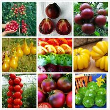 Tasty200 Mix Tomato Seeds Container/Ground Plant Non Gmo Heirloom Vegetable 1