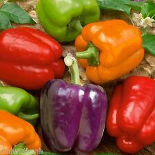 Organic Rainbow Mix Pepper 200 Seeds