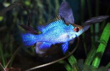 Peaceful Live Aquarium Fish