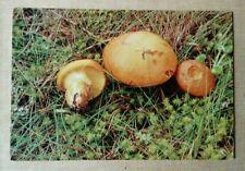 Postcard Size, Art Print, Mushroom,'Butter Boletus' Photo P.W.James