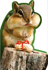 Funny Happy Birthday Squirrel Cheeks Packed Full Go Nuts Sunrise Greeting Card