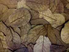 120 Stück ~20cm - Seemandelbaumblätter / Catappa Leaves / Wasseraufbereitung