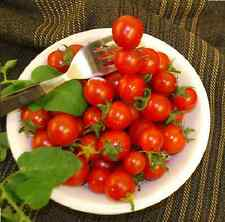 Vegetable - Tomato - Hundreds and Thousands - 10 Seeds