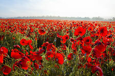 STUNNING Red Poppy Flower Field Canvas Picture #857 A1 Nature Landscape Wall Art