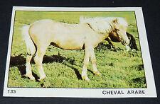 N°135 CHEVAL ARABE PANINI 1970 TOUS LES ANIMAUX EDITIONS DE LA TOUR