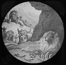 Glass Magic Lantern Slide DORE BIBLE THE SICK LION AND THE FOX C1890 DRAWING