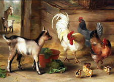 Vintage art  Baby Goats in Barn Rooster, and Chickens by Edgar Hunt