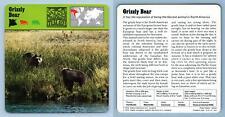 Grizzly Bear - Mammals - 1970's Rencontre Safari Wildlife Card
