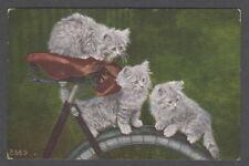 Vintage Cat Postcard Kittens on Bicycle