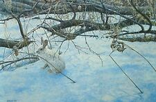 George McLean ,  Snowshoe Hare   S/N-  L/E   print