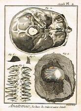 Diderot's Enclyclopedie - ANATOMIE, LA BASE DU CRANE ET AUTRES DETAILS - c1750