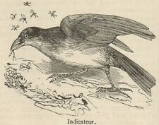 C8320 Indicateur - Stampa antica - 1892 Engraving