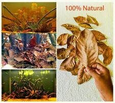 15X Jack leaves jackfruit leaf shrimp betta fish aquarium care Hiding Places